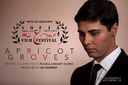 "Bulgarian festival picks ""Apricot Groves"""