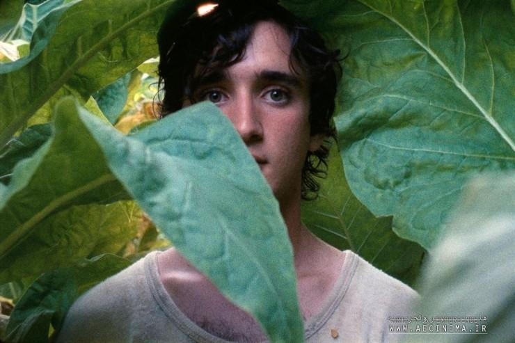 'Happy as Lazzaro': Alice Rohrwacher on the Importance of Being Open