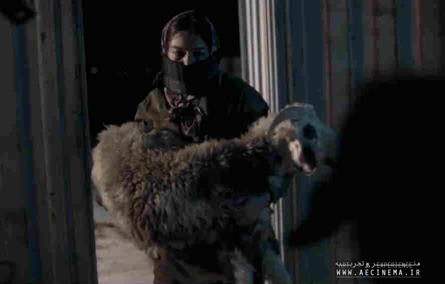"""""""Cocoon"""", """"Sheep Will Devour Us"""" win awards at Fine Arts Film Festival"""