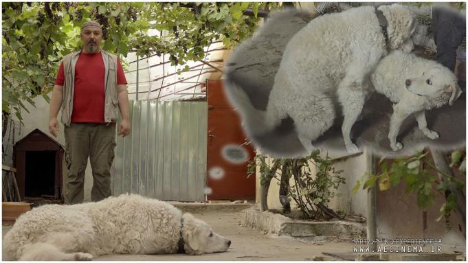 Hungarian-Romanian Doc 'Whose Dog Am I?' Attempts New Breed of Social Satire